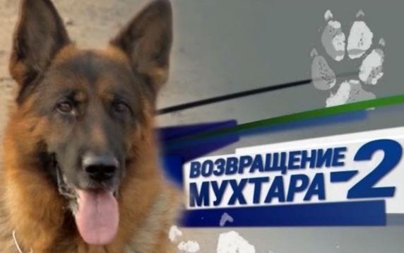 Собака 2015 онлайн